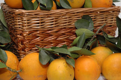 Oranges. And basket, with leaves, isolated Royalty Free Stock Images