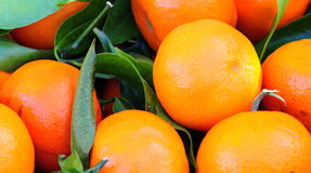 Oranges. Close up background shot of some freshly picked tangerines Royalty Free Stock Image