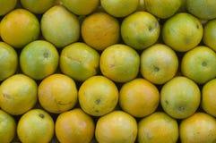 Free Oranges Royalty Free Stock Photo - 8167275