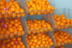 Free Oranges Royalty Free Stock Image - 9694836