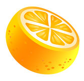 Oranges. Cut oranges isolate on the white background vector illustration