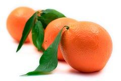 Oranges alignées Image stock