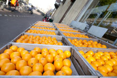 Oranges in Amsterdam Royalty Free Stock Photo
