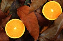 Oranges on autumn leafs Stock Photos