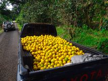 Oranges in the back of truck Royalty Free Stock Photography