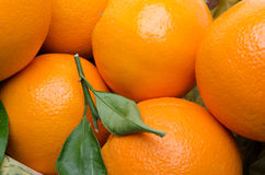 Oranges background Royalty Free Stock Images