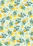Oranges background. Vintage botanical illustration oranges on mint green pastel background Stock Photos