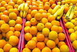 Oranges and bananas Stock Image