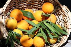 Oranges in the basket Stock Image