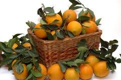 Oranges in the basket stock photos