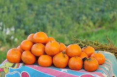 Oranges. Beautiful and fresh oranges on the way in punjab india . These are picked recently and are quite fresh. My mouth beame watery. Field fruits fields Royalty Free Stock Photo