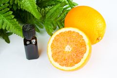 Oranges. Bottle of oil  and green leaves still-life Stock Images