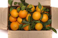 Oranges in the box. Isolated. the Oranges is with leaves stock photo