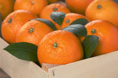Oranges in a box Royalty Free Stock Photo