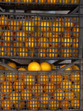 Oranges in a box Stock Images