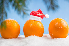 Oranges and branch of Christmas tree. Three oranges and branch of Christmas tree in the snow on a blue background, one orange in a small santa hat Royalty Free Stock Images