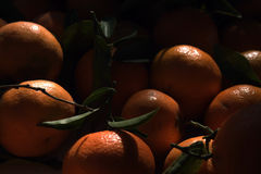 The oranges broken from a tree. Fresh fruit. Oranges with leaflets. Fruit. Tasty food. Healthy food stock photography