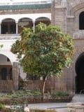 Oranges in Casablanca Stock Photos