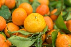 Oranges chinoises fraîches Images libres de droits