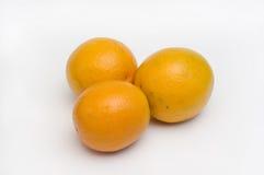 Oranges Citrus aurantium royalty free stock photography