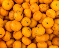 Oranges or Citrus for sale Stock Photo