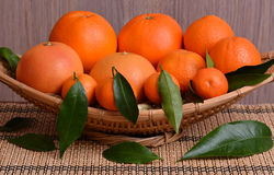 Oranges, clementines and mandarine with leaves Stock Image