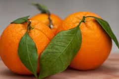 Oranges close-up Royalty Free Stock Photo