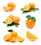 Oranges collection Royalty Free Stock Photo