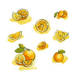 Oranges collection. Watercolor image of oranges and slices vector Stock Photos