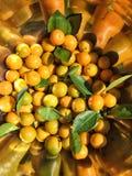 Oranges de Calamondin Photos libres de droits