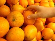 Oranges de cueillette Image libre de droits