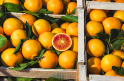 Oranges on Display at a Local Market Royalty Free Stock Photo