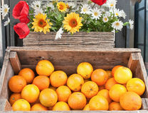 Oranges and flowers Stock Images