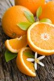 Oranges fraîches Images libres de droits