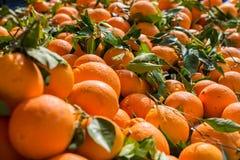 Oranges fraîches Photos stock