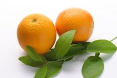 oranges fraîches Image stock