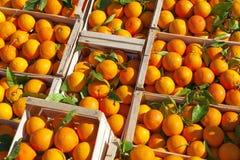 Oranges. Stock Photography