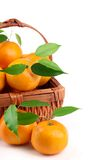 Oranges with Fresh Leaves Stock Photography