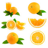 Orange fruit collection Royalty Free Stock Images
