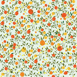 Oranges fruits seamless pattern Stock Photography