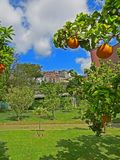 Oranges garden in the Botanical Garden of Napoli Naples, Italy. Summer sunny day royalty free stock images