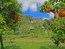 Oranges garden in the Botanical Garden of Napoli Naples, Italy. Summer sunny day royalty free stock photos
