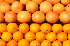 Oranges and grapefruits Royalty Free Stock Photo