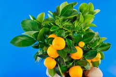 Oranges and green Leaf Stock Images