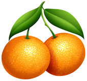 Oranges with green leaves. Illustration vector illustration