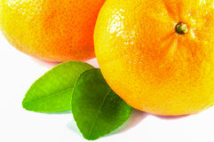 Oranges with green leaves. Over white background Stock Image