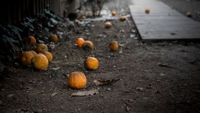 Oranges on the ground wasting. Oranges wasting on the ground in California, USA Royalty Free Stock Photo