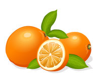 Oranges. Group of ripe oranges ,   illustration Stock Images