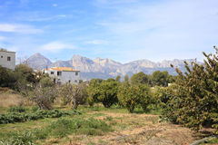 Oranges groves in southern Spain Royalty Free Stock Photos