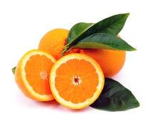 Oranges Stock Image